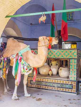 kairouan: KAIROUAN, TUNISIA - AUGUST 30, 2015: The camel stays next to the well in Bir Barouta, that is connected wit Zem-Zem spring in Mecca, on August 30 in Kairouan. Editorial