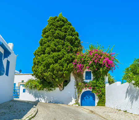 sidi bou said: The village boasts perfectly landscaped gardens with many bright flowers and shady trees, Sidi Bou Said, Tunisia.