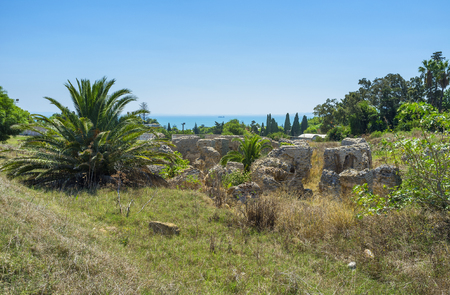 mediterranean forest: The pleasant walk among the Punic ruins and lush gardens in Carthage, Tunisia. Stock Photo