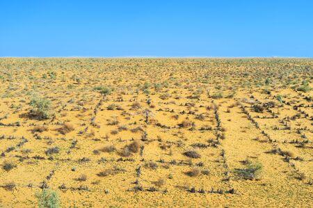 desert vegetation: The landscape of Kyzyl Kum desert with hot temperature and poor vegetation, Uzbekistan.
