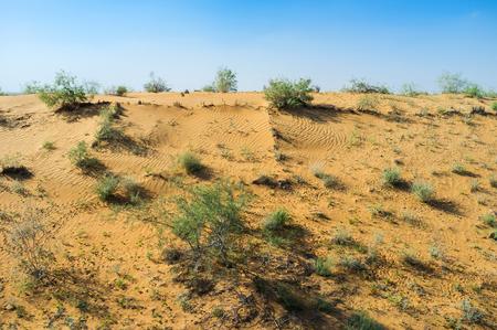 desert vegetation: The Kyzyl Kum desert with the poor vegetation, Uzbekistan.