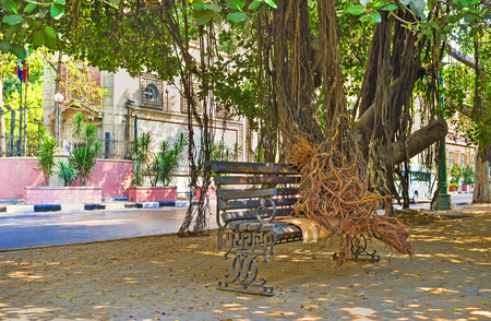 The banyan tree put its aerial roots on the bench on the Nile Corniche in City Garden district, Cairo, Egypt.