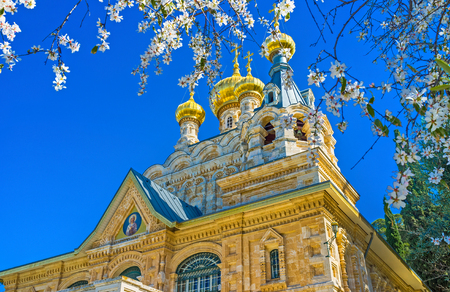 """The golden """"onion"""" domes of the Russian Orthodox Church of Mary Magdalene through the white flowers of the blossom tree, Jerusalem, Israel. Banco de Imagens"""