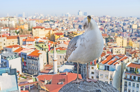 hand rail: The herring gull watches the tourists with interest and waits for the feast, sitting on the hand rail of the top of Galata Tower with the Istanbul cityscape on the background, Turkey. Stock Photo