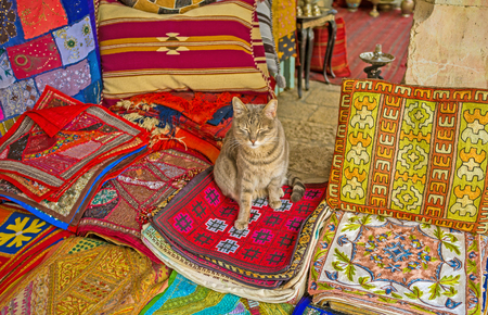 puss: The puss sits on the handmade embroidered pillowcases in the Aftimos Market stall, Jerusalem, Israel.