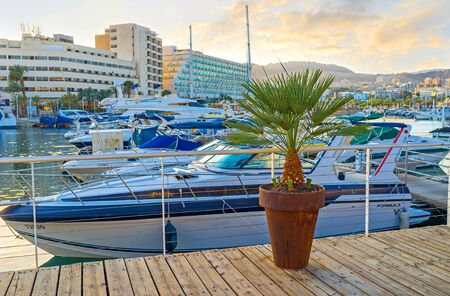 eilat: EILAT, ISRAEL - FEBRUARY 23, 2016: The small palm in the flower pot in the central promenade of resort, on February 23 in Eilat.