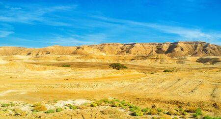 The poor vegetation of Negev desert, the hot and dry region of Israel.