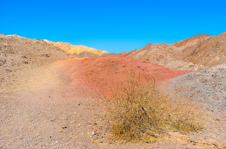 The dry thorn on the red slope in the desert of Eilat mountains, Israel. Stock Photo