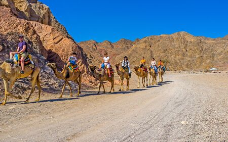 EILAT, ISRAEL - FEBRUARY 24, 2016: The tourists on camel safari in Masiv Eilat Nature Reserve among the rocky mountains, on February 24 in Eilat. Editorial
