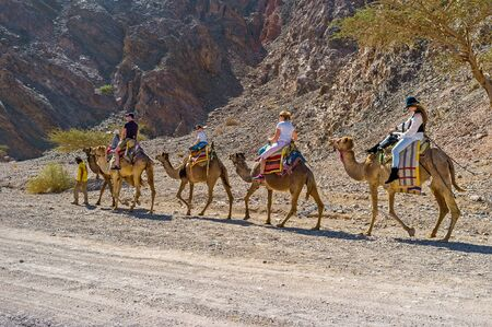 EILAT, ISRAEL - FEBRUARY 24, 2016: The camel safari to Masiv Eilat Nature Reserve is the popular tourist attraction, on February 24 in Eilat.