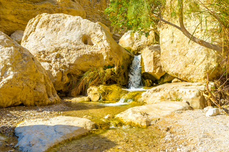 mountain oasis: The mountain river with the tiny falls in Ein Gedi oasis, Judean desert, Israel.