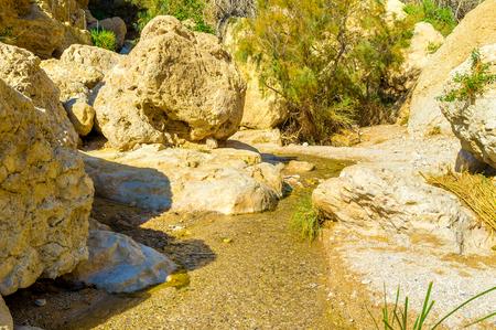 judean desert: The narrow spring in Ein Gedi oasis, located in Judean desert, Israel.
