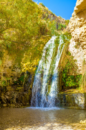 gedi: The mountain river in Ein Gedi oasis flows through the high rocks, forming waterfalls on its way, Israel.