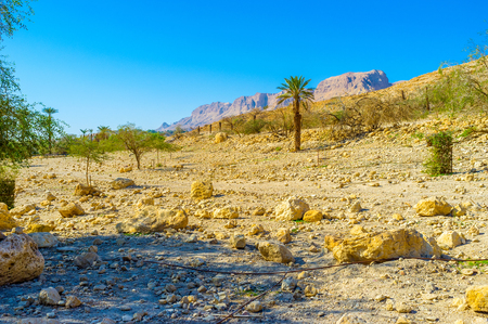 judean desert: The dry soil of Judean desert with the poor vegetation next to Ein Gedi Nature Reserve, Israel. Stock Photo