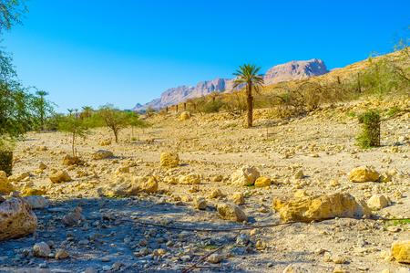 desert vegetation: The dry soil of Judean desert with the poor vegetation next to Ein Gedi Nature Reserve, Israel. Stock Photo