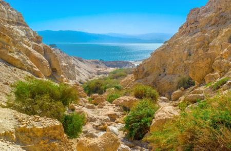 judean desert: The green oasis in gorge among the Judean desert with the Dead Sea on background, Israel. Stock Photo