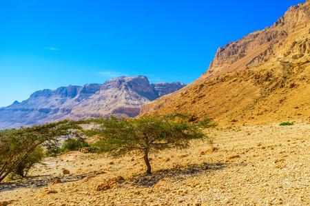 judean desert: The hiking to the mountains of Judean desert in Ein Gedi Nature Reserve, Israel.