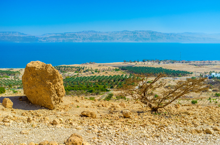 kibbutz: The view from the mountain top on the agricultural planting of Ein Gedi kibbutz on the coast of the Dead Sea, Israel.