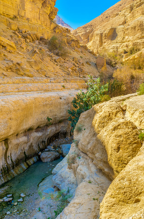 judean desert: The noisy mountain river in the narrow shady canyon of Ein Gedi Nature Reserve, Judean desert, Israel. Stock Photo