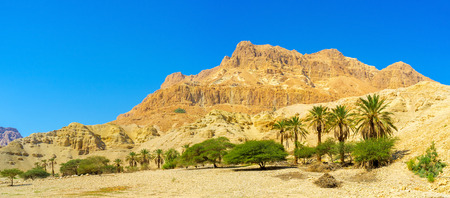 The Judean Desert is one of the world's smallest, yet most unique desert regions, Ein Gedi Nature Reserve, Israel.
