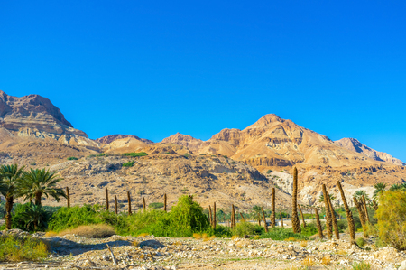 dea: The palm farm at the foot of the rocky mountain of Judean desert, Ein Gedi, Israel.