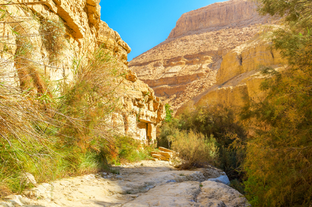 Ein Gedi Nature Reserve is perfect to enjoy the desert climate, but for tired tourists there are some shady areas, Israel. Stock Photo