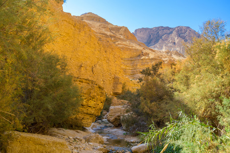 The fresh and shady area at the mountin river in deep gorge, Ein Gedi, Israel. Stock Photo