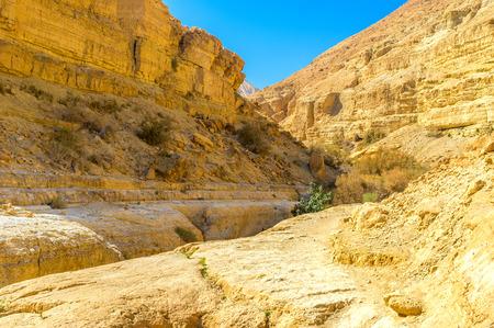 judean desert: The deep gorge stretches in Judean desert along the mountain river, Ein Gedi, Israel.