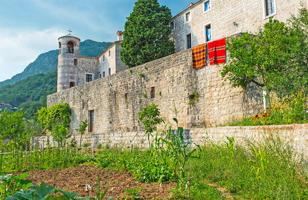 The kitchen-gardens of the Podmaine Monastery located at its medieval walls, Budva, Montenegro.