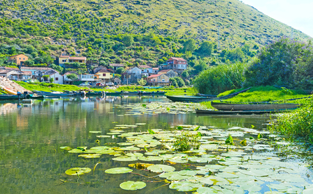 The water lilies on Moraca River with small colorful houses of Vranjina fishing village on the background, Montenegro.
