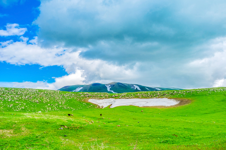 snowfield: The dusty snowfield on the green meadow in highlands of Gegharkunik Province, Armenia. Stock Photo