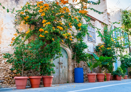 rethymno: The scenic green plants and flowers in pots create the tiny garden in front of the old house, Rethymno, Crete, Greece. Stock Photo