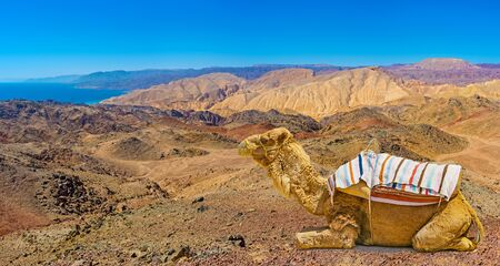 The best way to discover Israeli desert is to take a camel ride and overlook Aqaba Gulf, mountains of Jordan, Egypt and Saudi Arabia.