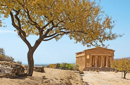 concordia: The view on the Concordia Temple with the almond tree on the goreground, Agrigento, Sicily, Italy. Stock Photo