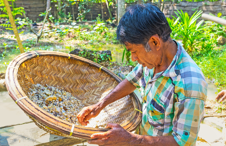 MEETIYAGODA, SRI LANKA - DECEMBER 5, 2016: The worker of the moonstone mine filters out the precious stones from the basket, on December 5 in Meetiyagoda. Editorial