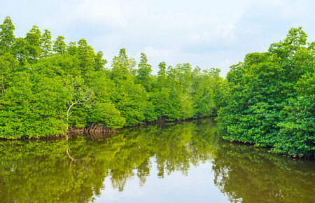 The Madu river in Sri Lanka is the perfect place to discover the mangrove forests and unique nature of the island.