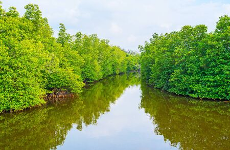 The banks of Madu river occupied with the lush mangrove forests, interesting place to discover on boat, Sri Lanka.