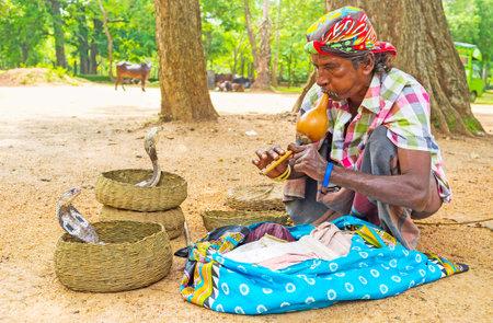 charmer: ANURADHAPURA, SRI LANKA - NOVEMBER 26, 2016: The snake charmer mesmerizes the cobras with sounds of pungi, traditional aerophonic instrument, on November 26 in Anuradhapura.