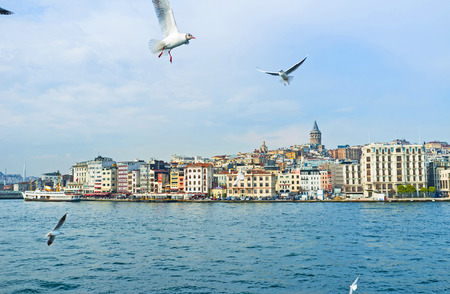 The flying gulls over the Golden Horn Bay with the central city district on the background, Istanbul, Turkey.