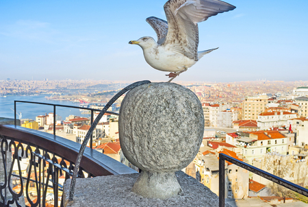 repel: The seagull repels before takeoff from the stone ball on Galata Tower in the old Istanbul, Turkey.