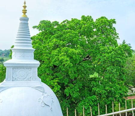 temple tank: The spire of Stupa in Isurumuniya Temple rises over the highest trees of garden, Anuradhapura, Sri Lanka.