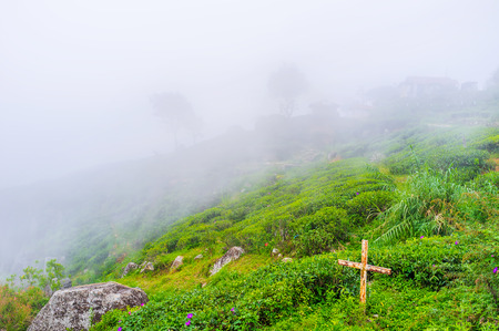 The fog is a usual weather phenomen in mountains of Sri Lanka in winter season, Haputale