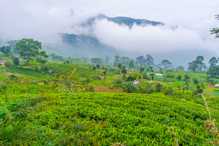The view on tea plantations with misty mountains on the background, Haputale, Sri Lanka Stock Photo