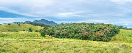 plains indian: The montane forest in the Horton Plains National Park, Sri Lanka