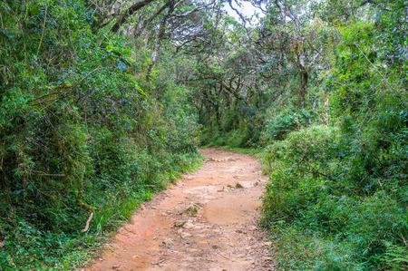 plains indian: The main touristic footpath runs through beautiful evergreen forest, Horton Plains Park, Sri Lanka