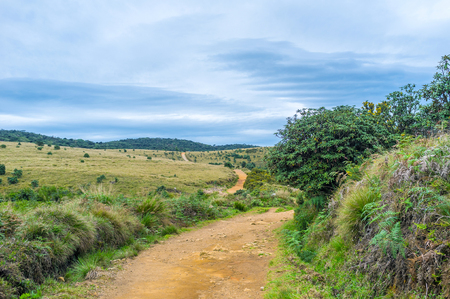 plains indian: The footpath in the Horton Plains runs through the hills and forests, Sri Lanka