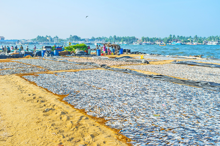 NEGOMBO, SRI LANKA - NOVEMBER 25, 2016: The sun dry is traditional method of fish processing, used in Sri Lanka, the beaches of Negombo lagoon are full of giant sackclothes with anchovies and other fish species, on November 25 in Negombo.