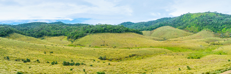 plains indian: The grassland fields of Horton Plains Park is the most peaceful place in whole Sri Lanka where only wind breaks the silence Stock Photo