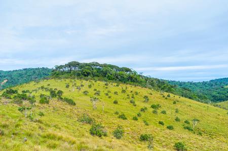 plains indian: The highland plateau Horton Plains has its own ecosystem with untypical vegetation, Sri Lanka