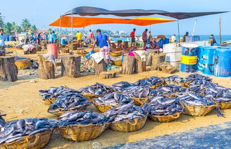 triggerfish: NEGOMBO, SRI LANKA - NOVEMBER 25, 2016: The fishing port has area for fish processing - here locate the cutting decks, areas for fish cleaning and baskets, packed with fish for sale, on November 25 in Negombo.